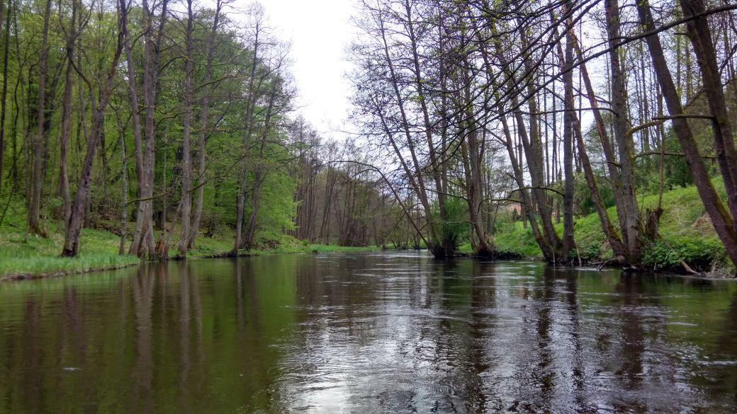 Spływ kajakiem - Stara Rzeka 12