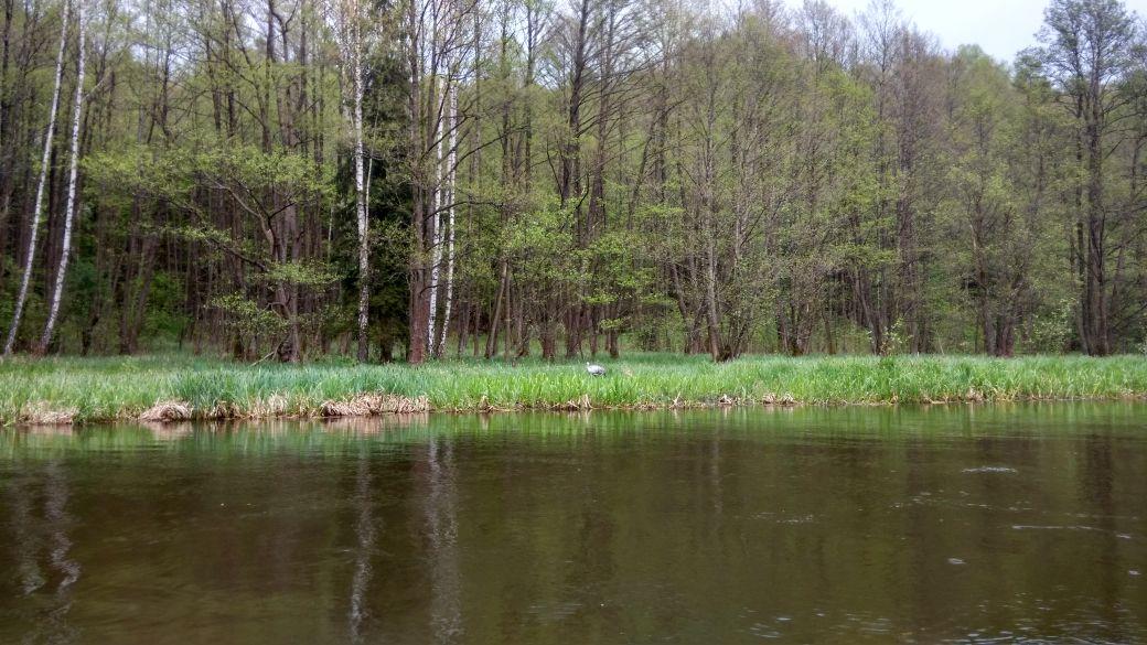 Spływ kajakiem - Stara Rzeka 13