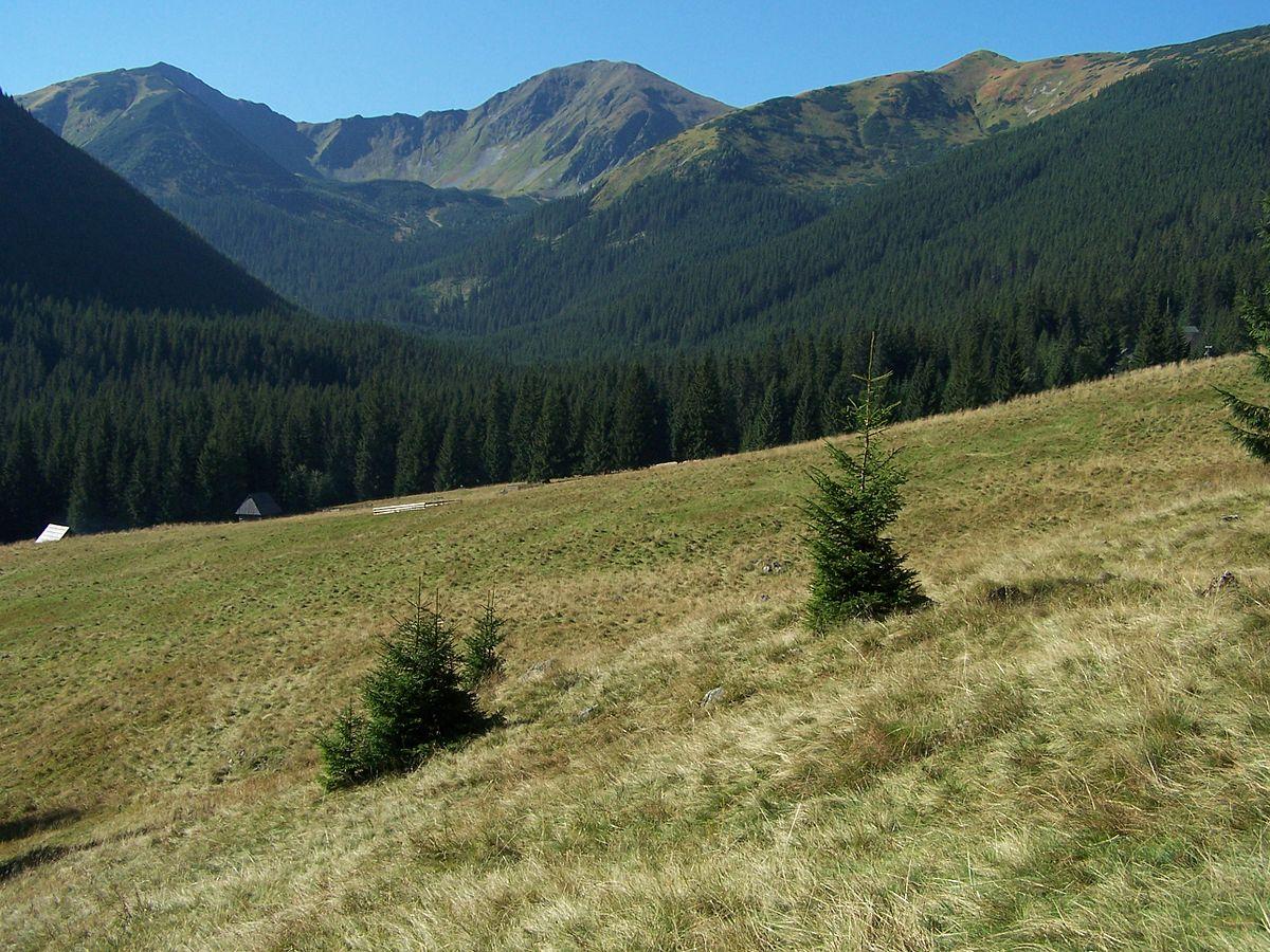 Dolina Chochołowska - Zakopane