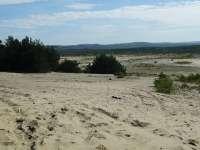 Pustynia Błędowska największa pustynia w Europie